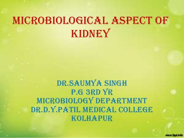MICROBIOLOGICAL ASPECT OF kidney  DR.SAUMYA SINGH P.G 3rd YR MICROBIOLOGY Department dr.d.y.patil medical college kolhapur