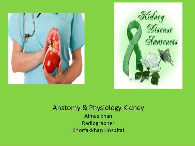 Anatomy & Physiology Kidney Almas khan Radiographer Khorfakkhan Hospital
