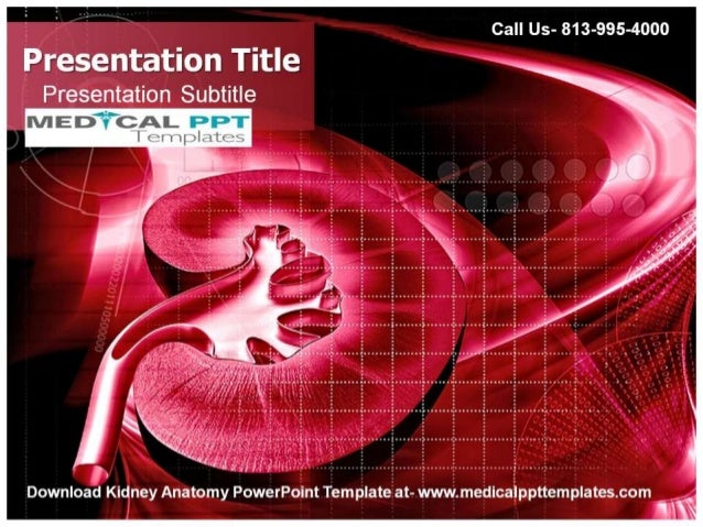 Kidney anatomy powerpoint template for Anatomy ppt templates free download