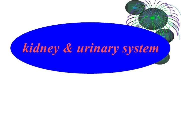 kidney & urinary system