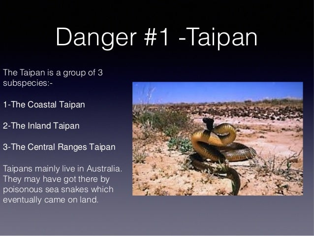Taipan Facts For Kids