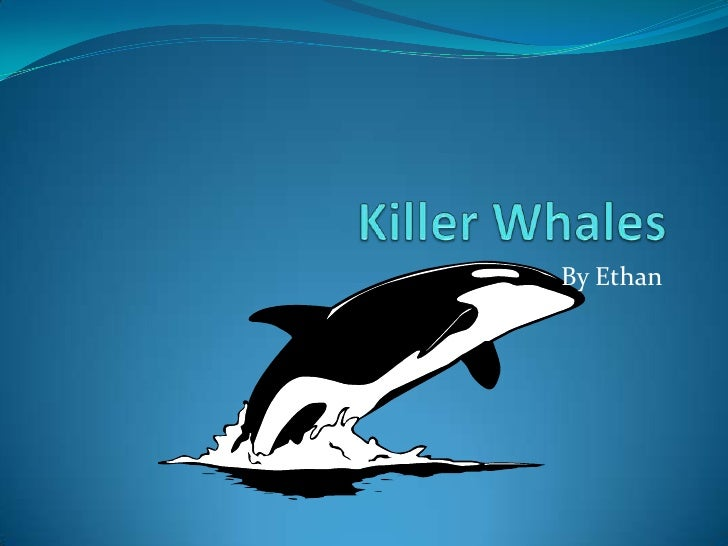 Killer Whales<br />By Ethan<br />