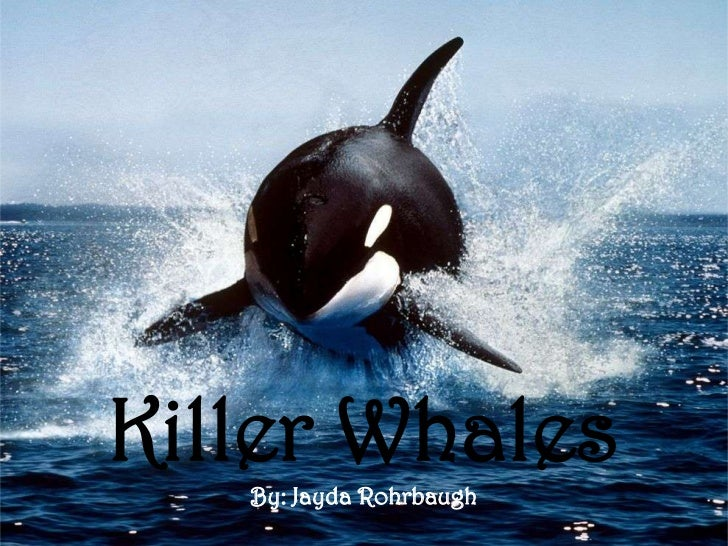 Killer WhalesKiller Whales   By: Jayda Rohrbaugh