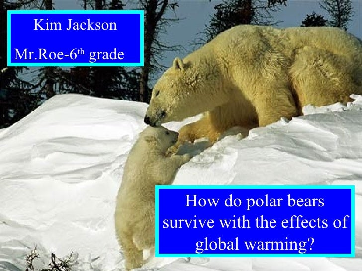 By: Kim Jackson Mr.Roe- 6 th  grade How do polar bears survive with the effects of global warming? Kim Jackson Mr.Roe-6 th...