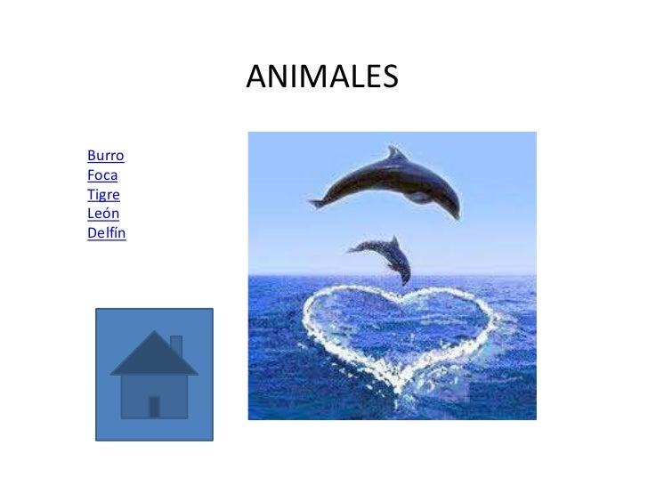 ANIMALESBurroFocaTigreLeónDelfín