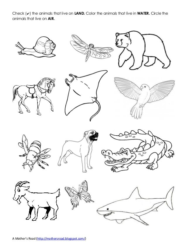 Coloring Pages Of Aquatic Animals : Land and water animals drawing pixshark images