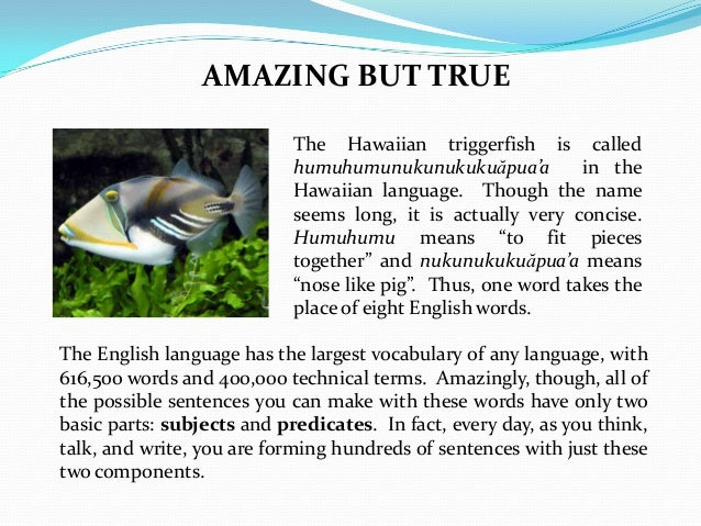 AMAZING BUT TRUE The Hawaiian triggerfish is called humuhumunukunukukuăpua'a in the Hawaiian language. Though the name see...