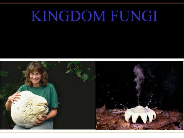Kingdom  Fungi ( Bahasa)