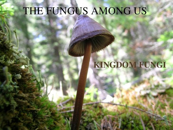 THE FUNGUS AMONG US KINGDOM FUNGI