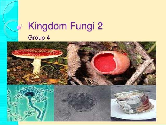 Kingdom Fungi 2Group 4