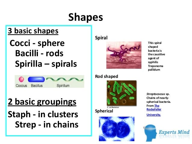 Sizes Shapes and Arrangements of Bacteria