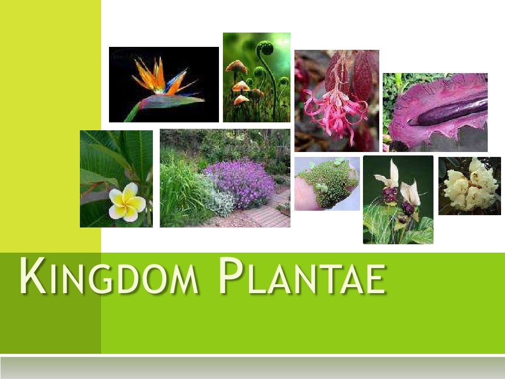 Kingdom Plantae Examples Files From Users