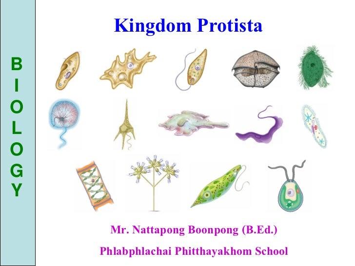 Kingdom ProtistaBIOLOGY      Mr. Nattapong Boonpong (B.Ed.)    Phlabphlachai Phitthayakhom School