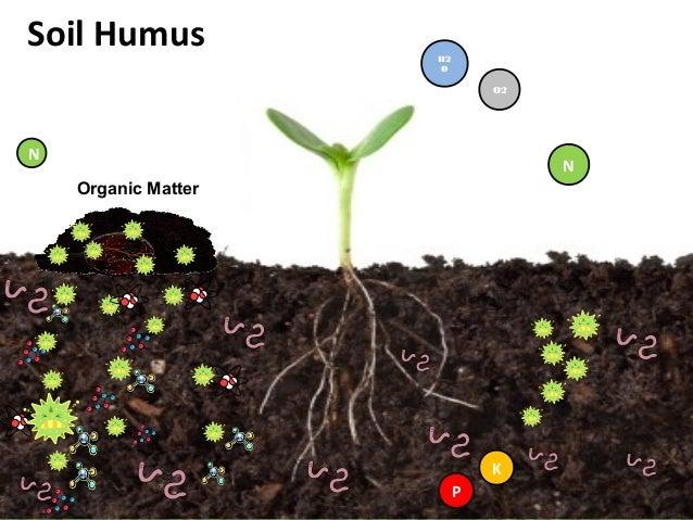 King humus plus presentation by kim c. gabuya