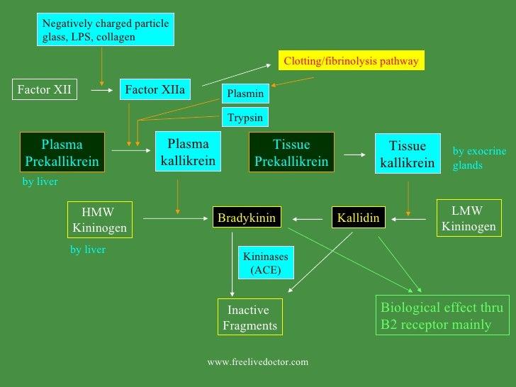 Factor XII Plasma Prekallikrein Plasma kallikrein HMW  Kininogen Bradykinin Kininases (ACE) Inactive  Fragments LMW  Kinin...