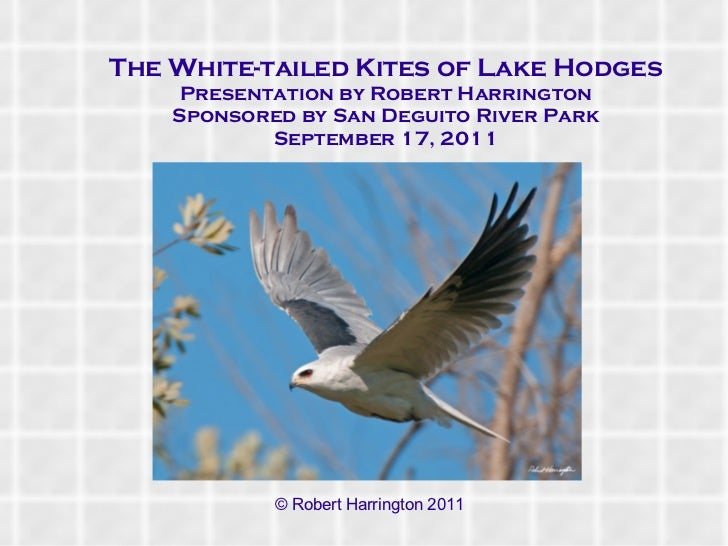 <ul>The White-tailed Kites of Lake Hodges Presentation by Robert Harrington Sponsored by San Deguito River Park September ...