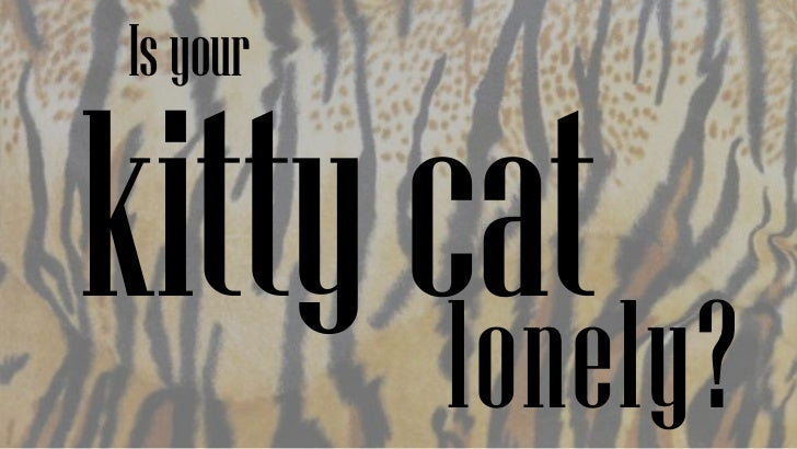 Kitty cat care