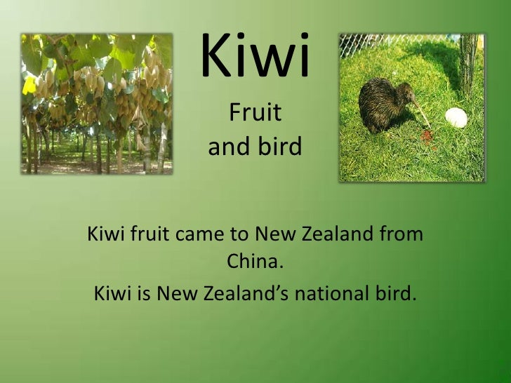KiwiFruitand bird<br />Kiwi fruit came to New Zealand from China.<br />Kiwi is New Zealand's national bird. <br />