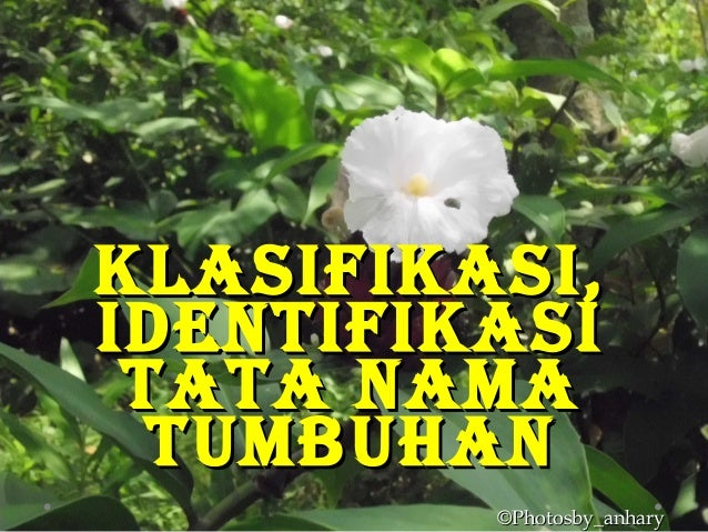 KlasifiKasi,KlasifiKasi, identifiKasiidentifiKasi tata namatata nama tumbuhantumbuhan ©Photosby_anhary©Photosby_anhary