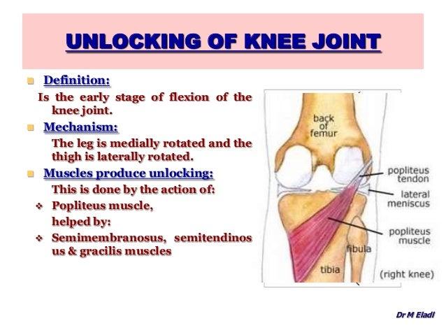 Knee joint anatomy on slideshare 4432983 seafoodnetfo knee joint anatomy on slideshare ccuart Image collections