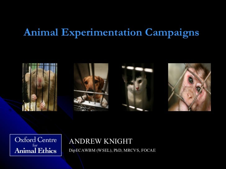 Animal Experimentation Campaigns                                 ANDREW KNIGHT        DipECAWBM (WSEL), PhD, MRCVS, FOCAE