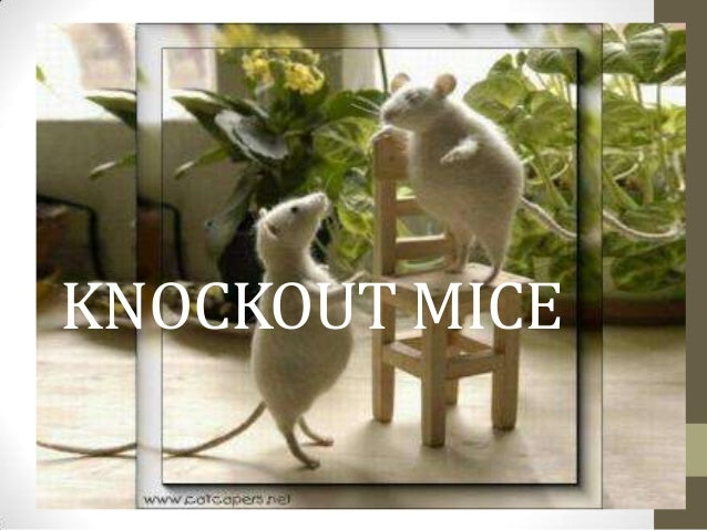 KNOCKOUT MICE