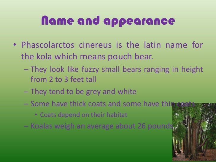 Koala Facts for Kids | Australian Animals | Marsupials
