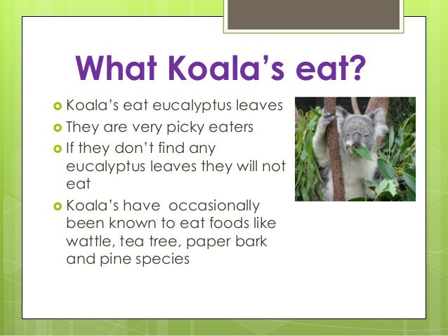 information about a koala Eco friendly, all natural, cleaning products plant based and australian made.