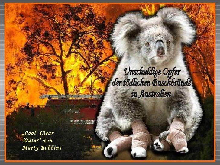 """Arme Koalas Unschuldige Opfer der tödlichen Buschbrände in Australien """" Cool  Clear  Water"""" von Marty Robbins"""