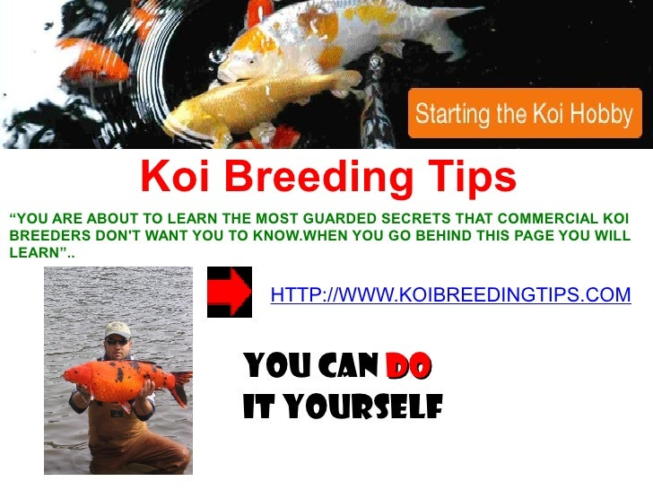 "Koi Breeding Tips ""YOU ARE ABOUT TO LEARN THE MOST GUARDED SECRETS THAT COMMERCIAL KOI BREEDERS DON'T WANT YOU TO KNOW.WHE..."