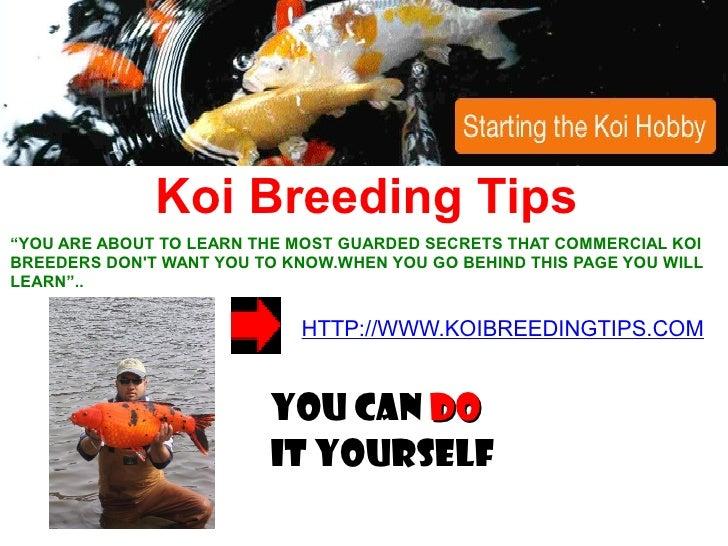 Koi Breeding Tips