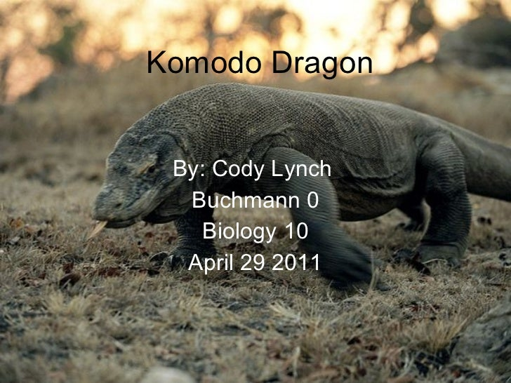 Komodo Dragon By: Cody Lynch  Buchmann 0 Biology 10 April 29 2011