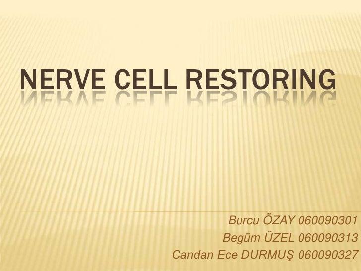 Nerve Cell restoring<br />Burcu ÖZAY 060090301<br />Begüm ÜZEL 060090313<br />Candan Ece DURMUŞ 060090327<br />
