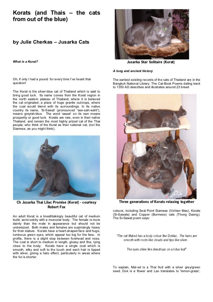 Korats (and Thais – the catsfrom out of the blue)by Julie Cherkas – Jusarka CatsWhat is a Korat?                          ...