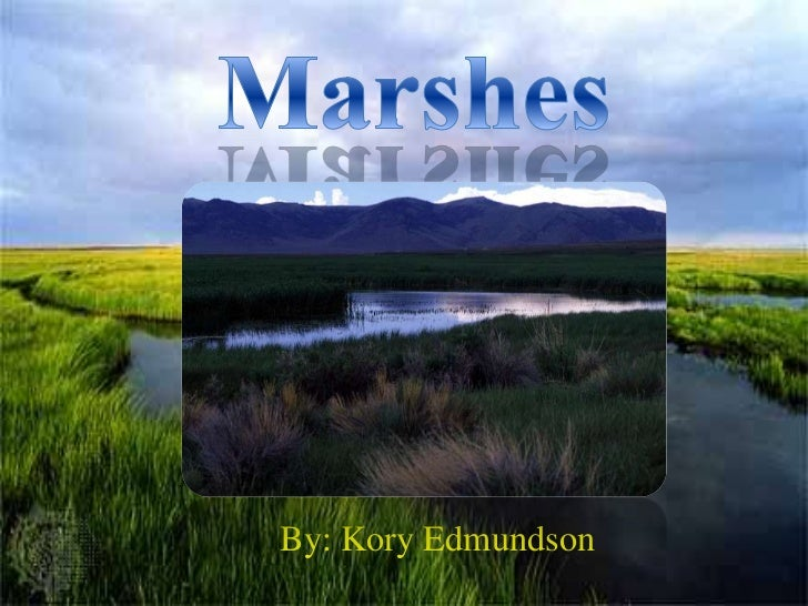 Kory's Project: Marshes