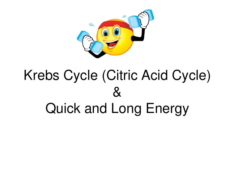 Krebs Cycle (Citric Acid Cycle)& Quick and Long Energy<br />