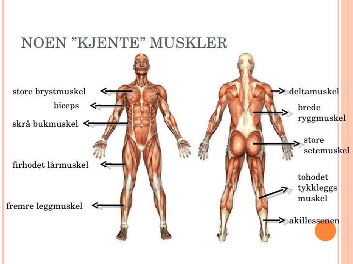 kvinnekropp muskler i kroppen navn