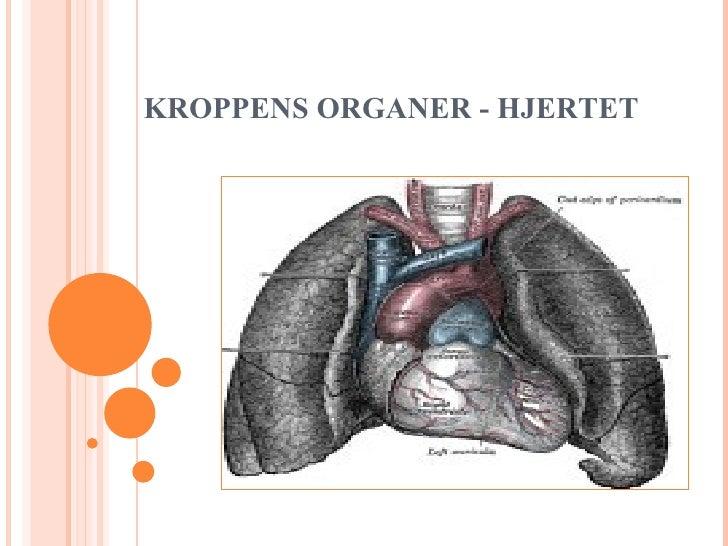KROPPENS ORGANER - HJERTET