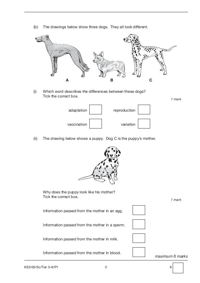 science papers ks3