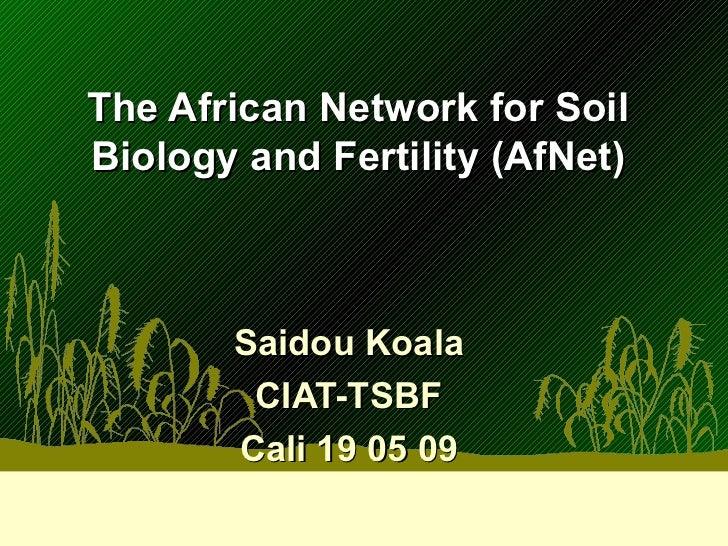 The African Network for Soil Biology and Fertility (AfNet) Saidou Koala CIAT-TSBF Cali 19 05 09