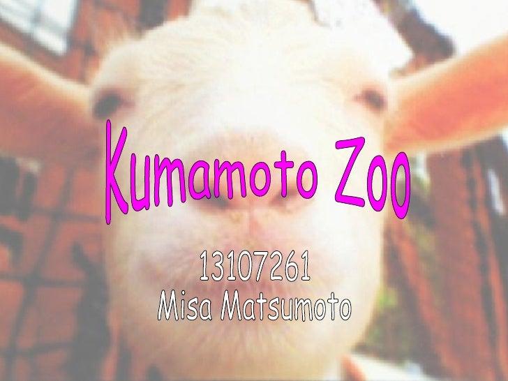 Kumamoto Zoo 13107261 Misa Matsumoto Kumamoto Zoo 13107261 Misa Matsumoto