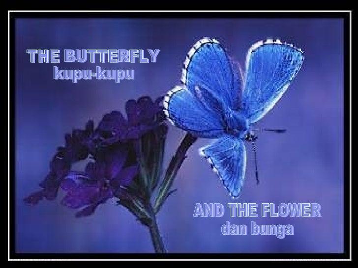 THE BUTTERFLY kupu-kupu AND THE FLOWER dan bunga