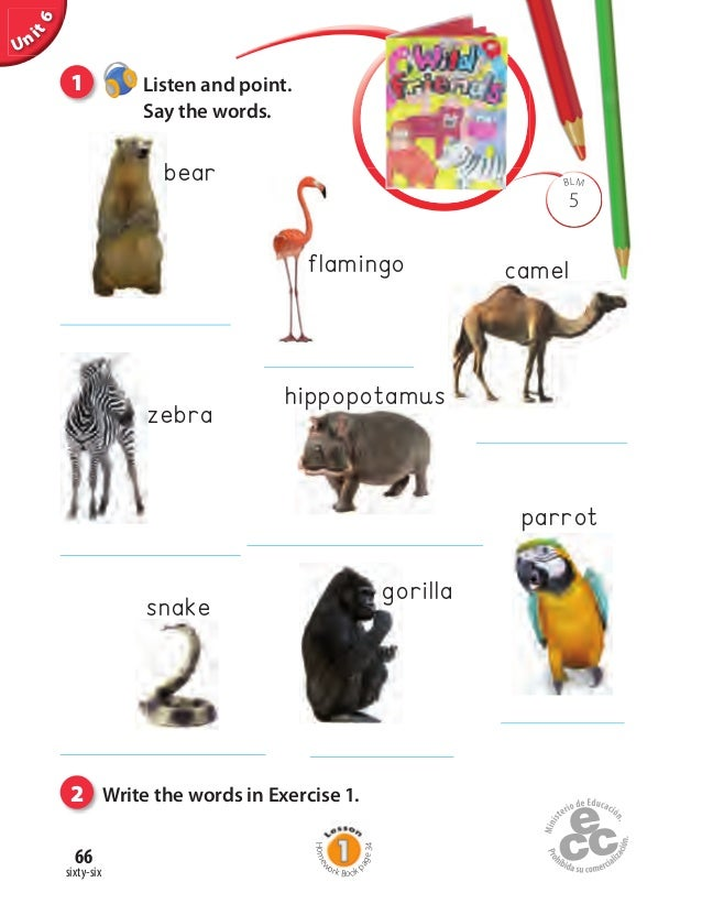 Write about parrot in english