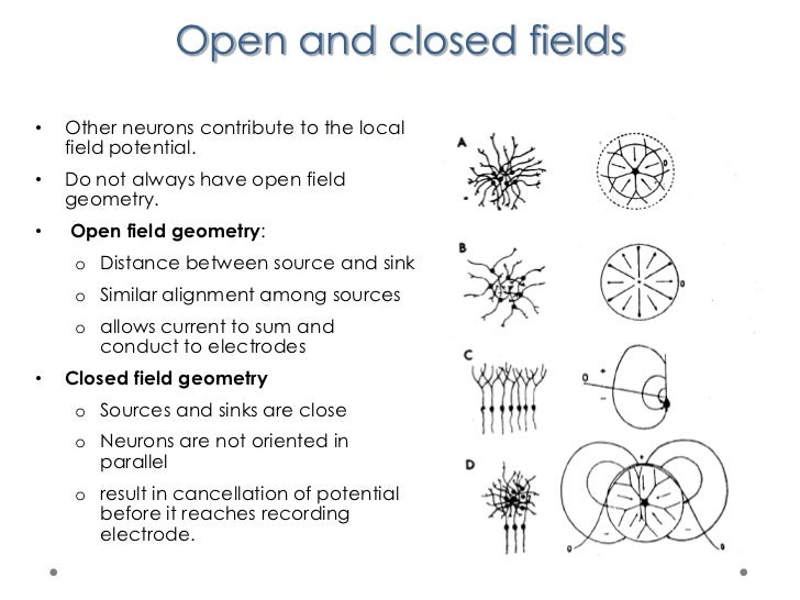 Local Field Potential The Local Field Potential