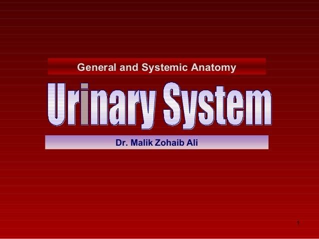 General and Systemic Anatomy  Dr. Malik Zohaib Ali  1