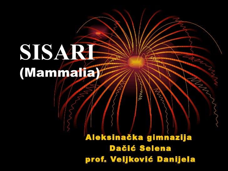 SISARI(Mammalia)        Aleksinačka gimnazija               Dačić Selena        pr of. Veljković Danijela