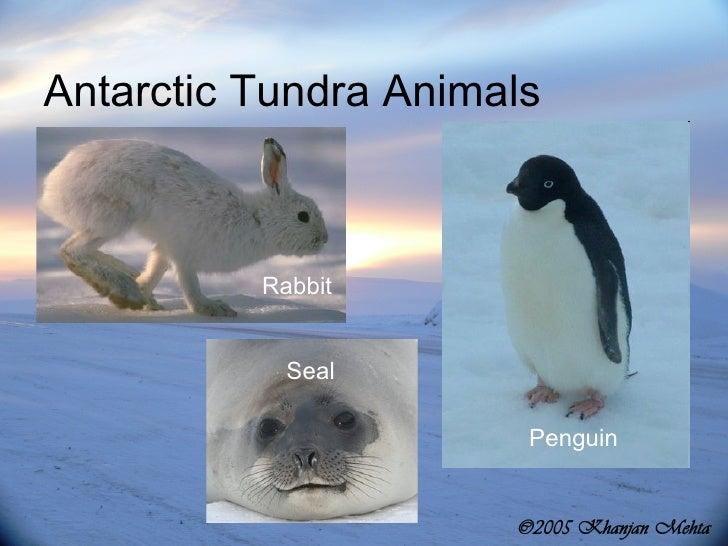 Tundra animals names