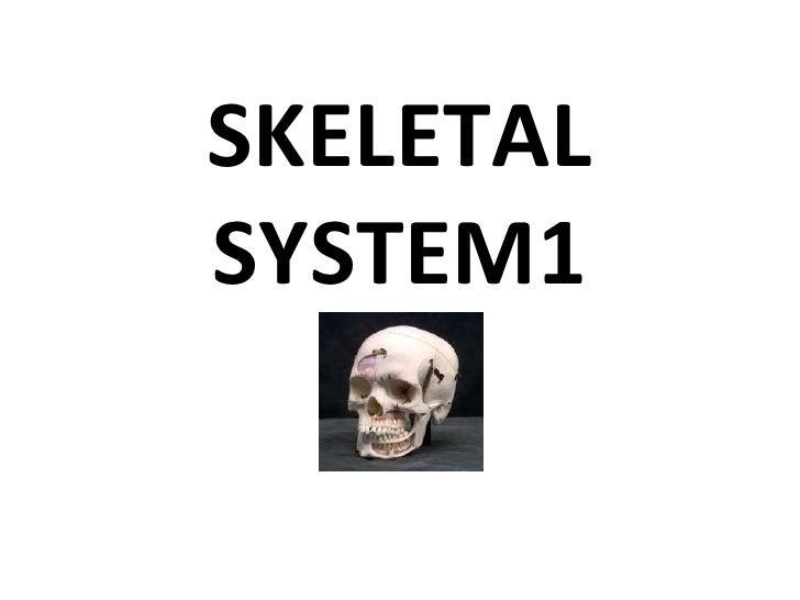 SKELETAL SYSTEM1<br />