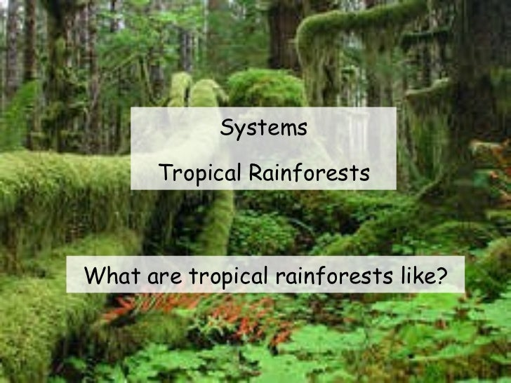 Systems Tropical Rainforests What are tropical rainforests like?