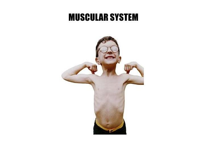 L4 Muscles1